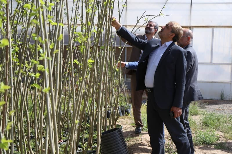 تولید گل و گیاهان متناسب با اقلیم قم کاری در مسیر تحقق اقتصاد مقاومتی است