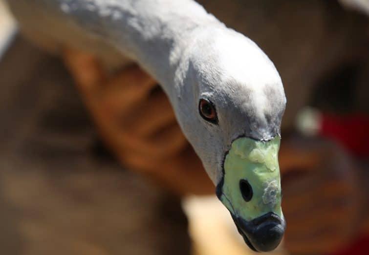 بازدید از محل نگهداری پرندگان پروژه باغ پرندگان قم