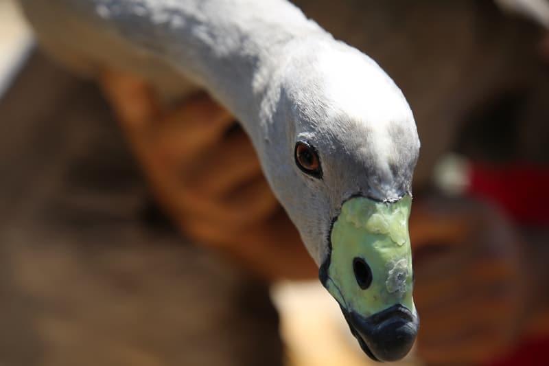 باغ پرندگان قم تا ۲ ماه آینده به بهرهبرداری میرسد